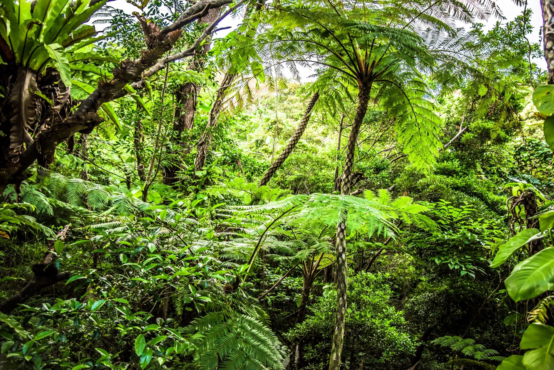 西表島の亜熱帯ジャングルの様子