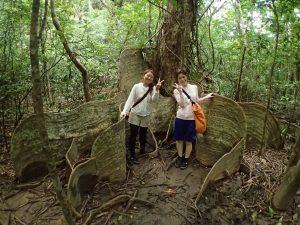 西表の珍しい木を観察ツアー