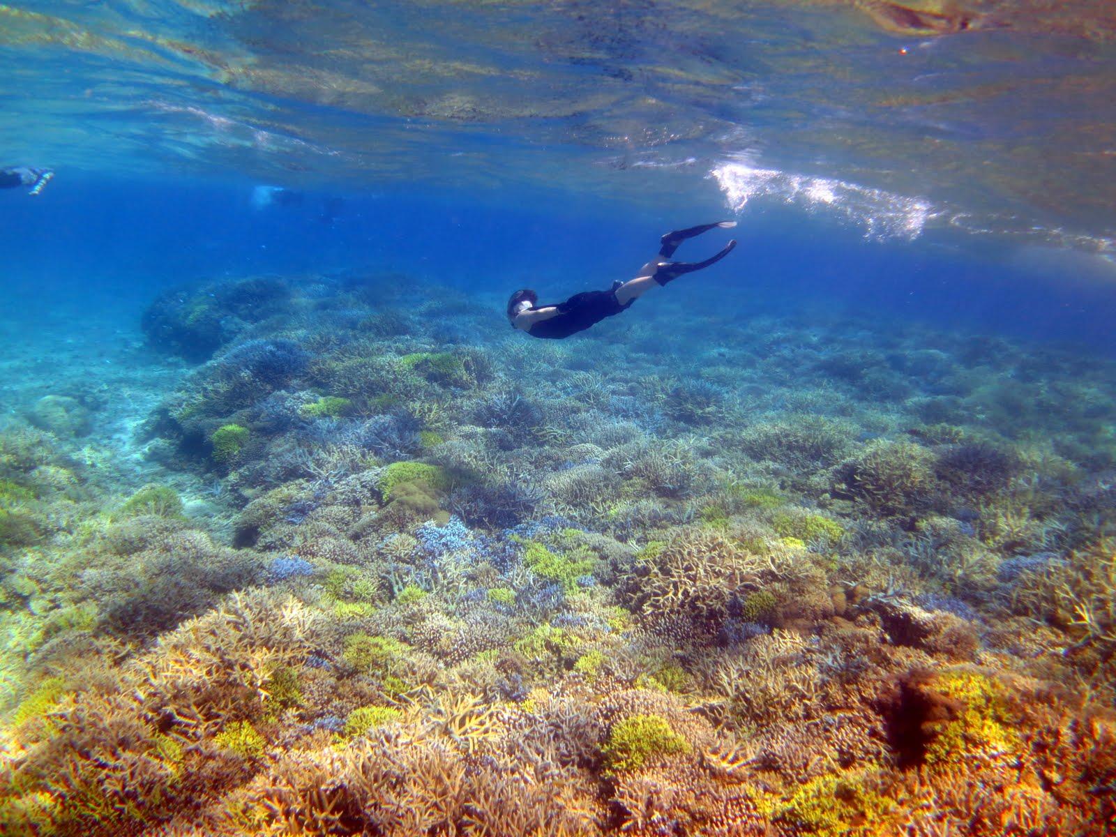 美しいサンゴと透き通った水の中をシュノーケル