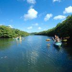 浦内川でカヌー体験
