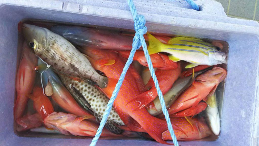西表島で釣れる魚たち
