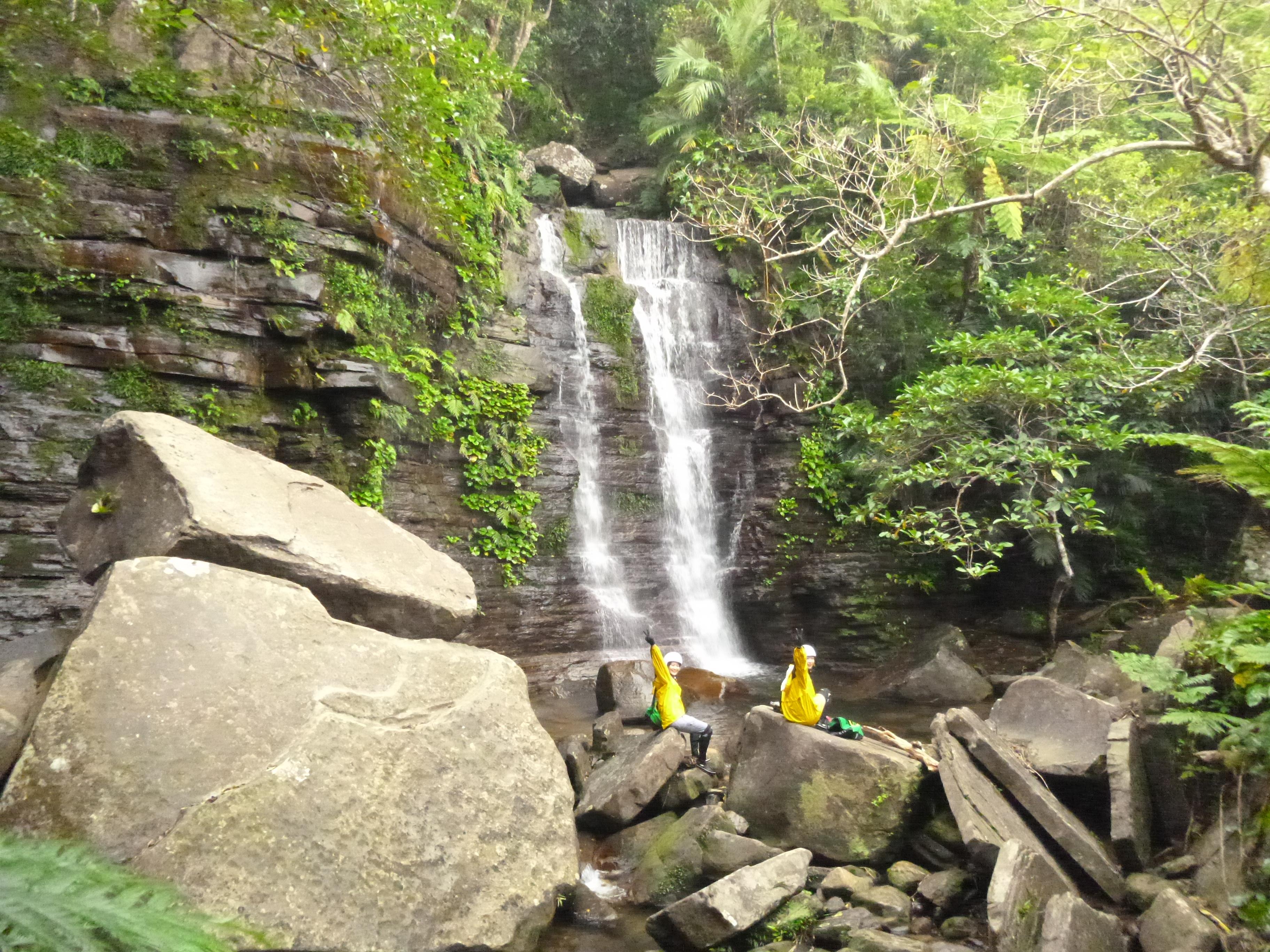 西表島のジャングルと滝