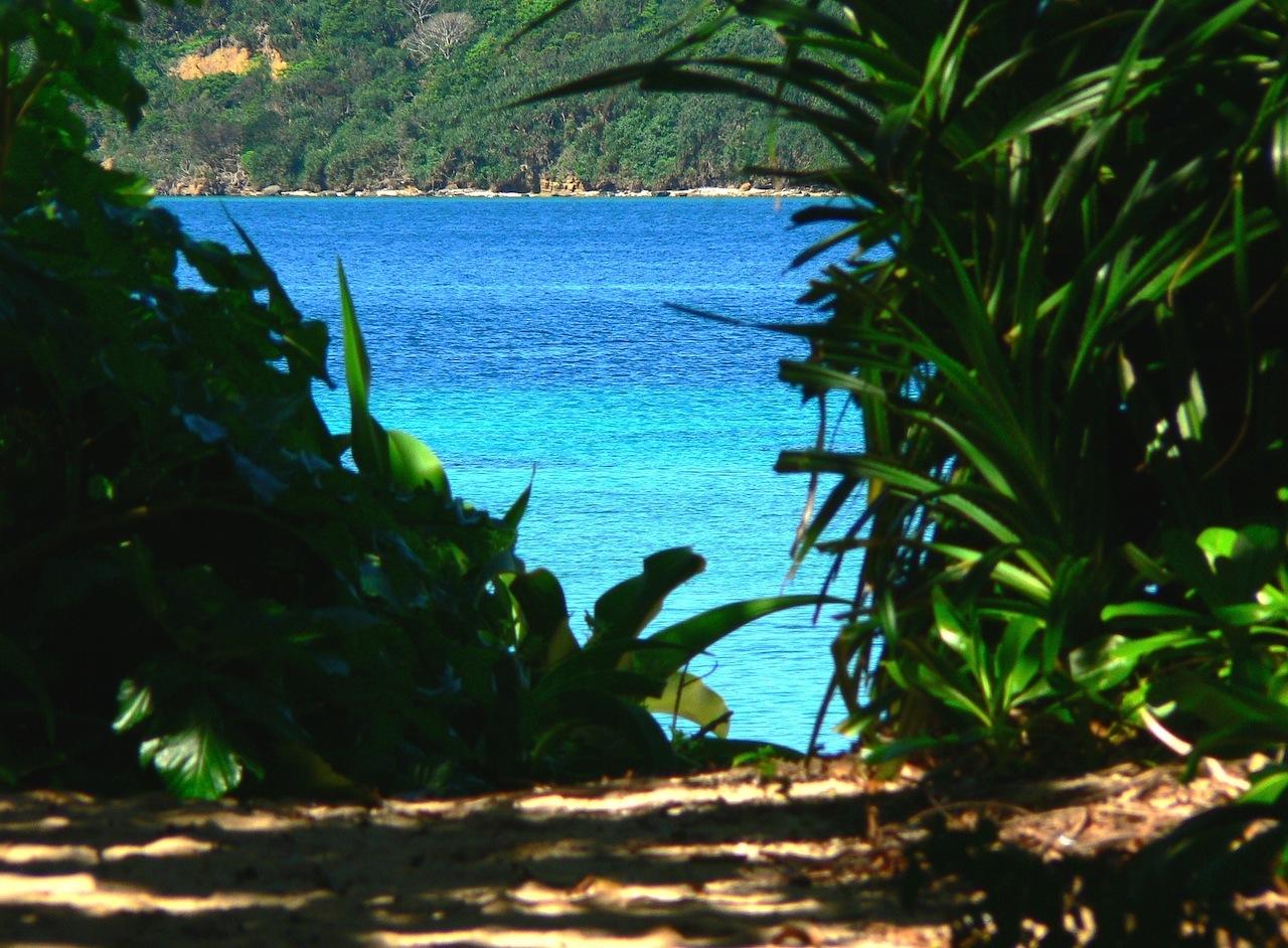 西表の秘境耳切りの浜へつながる小道