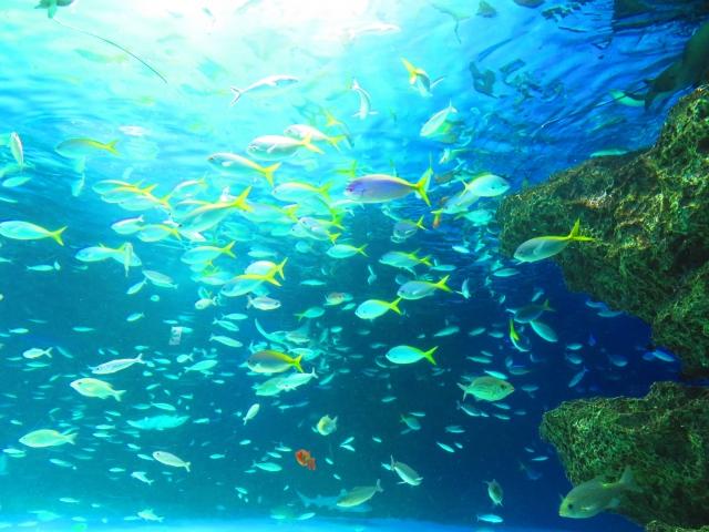 西表島でダイビングスポットでの魚群