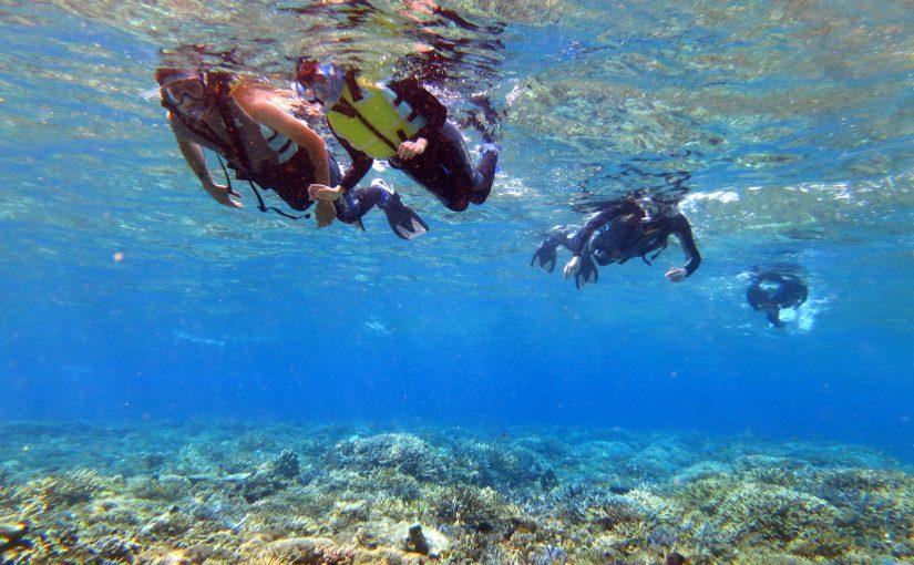 西表島のきれいな海を泳ぐ