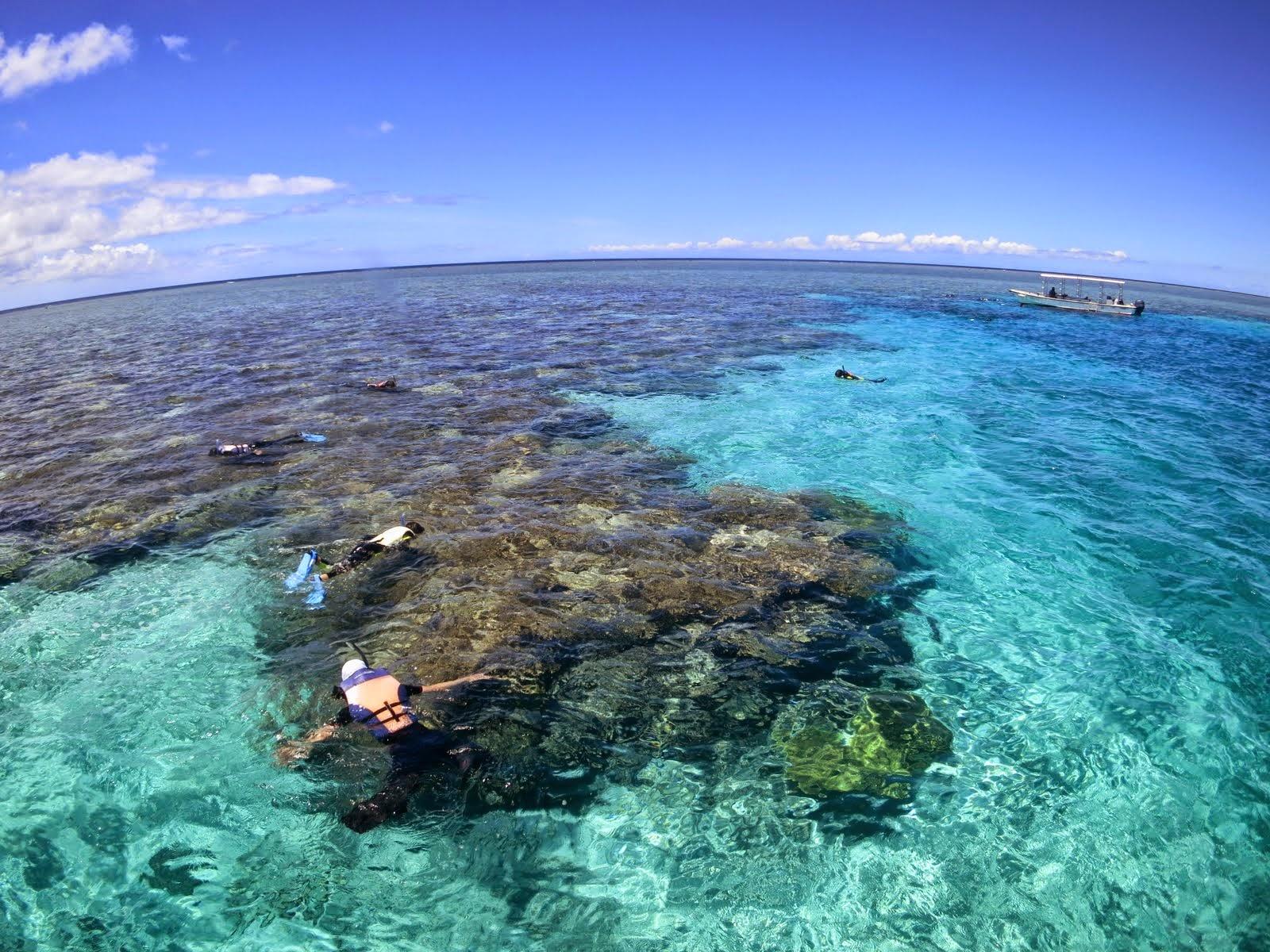 西表島のサンゴ礁をみながらスノーケリング