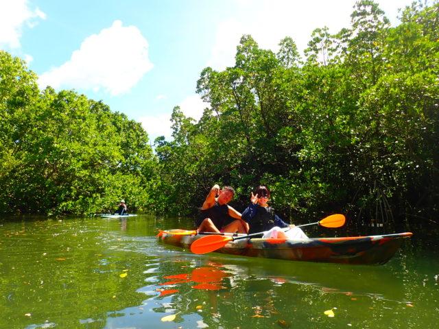西表島のマングローブ林カヤック