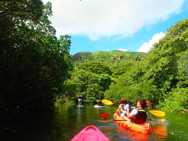 カヌーから眺めるマングローブ林