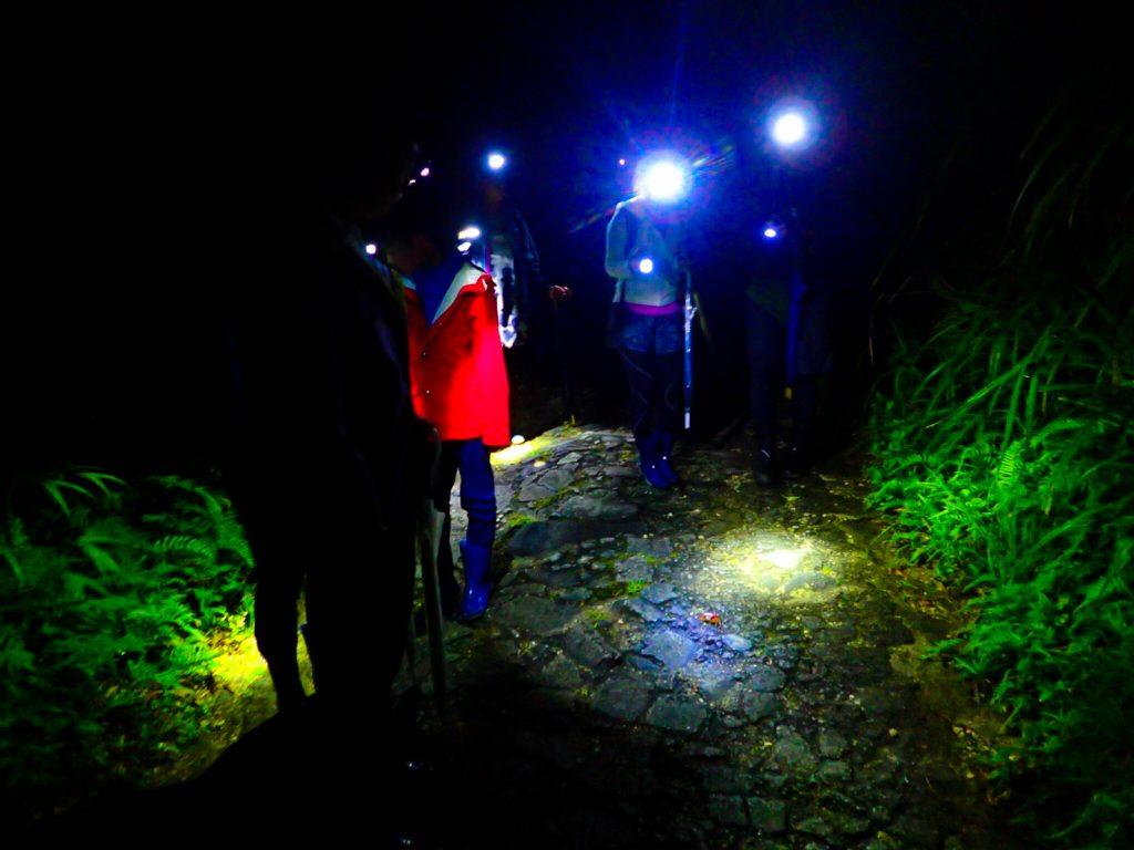 西表島ジャングルナイトツアー