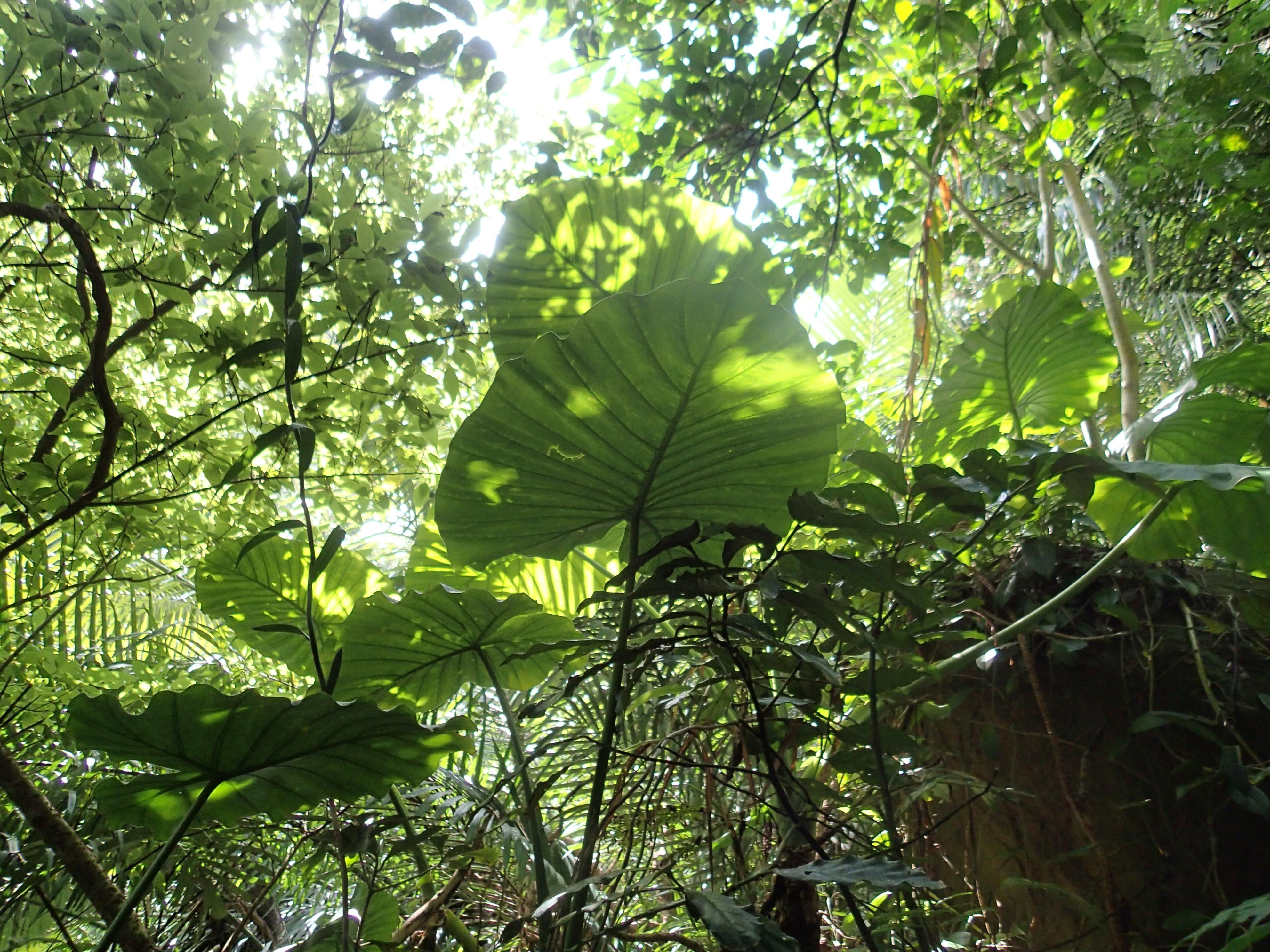 西表島ジャングル風景