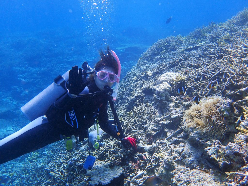 西表島ダイビングで楽しむ