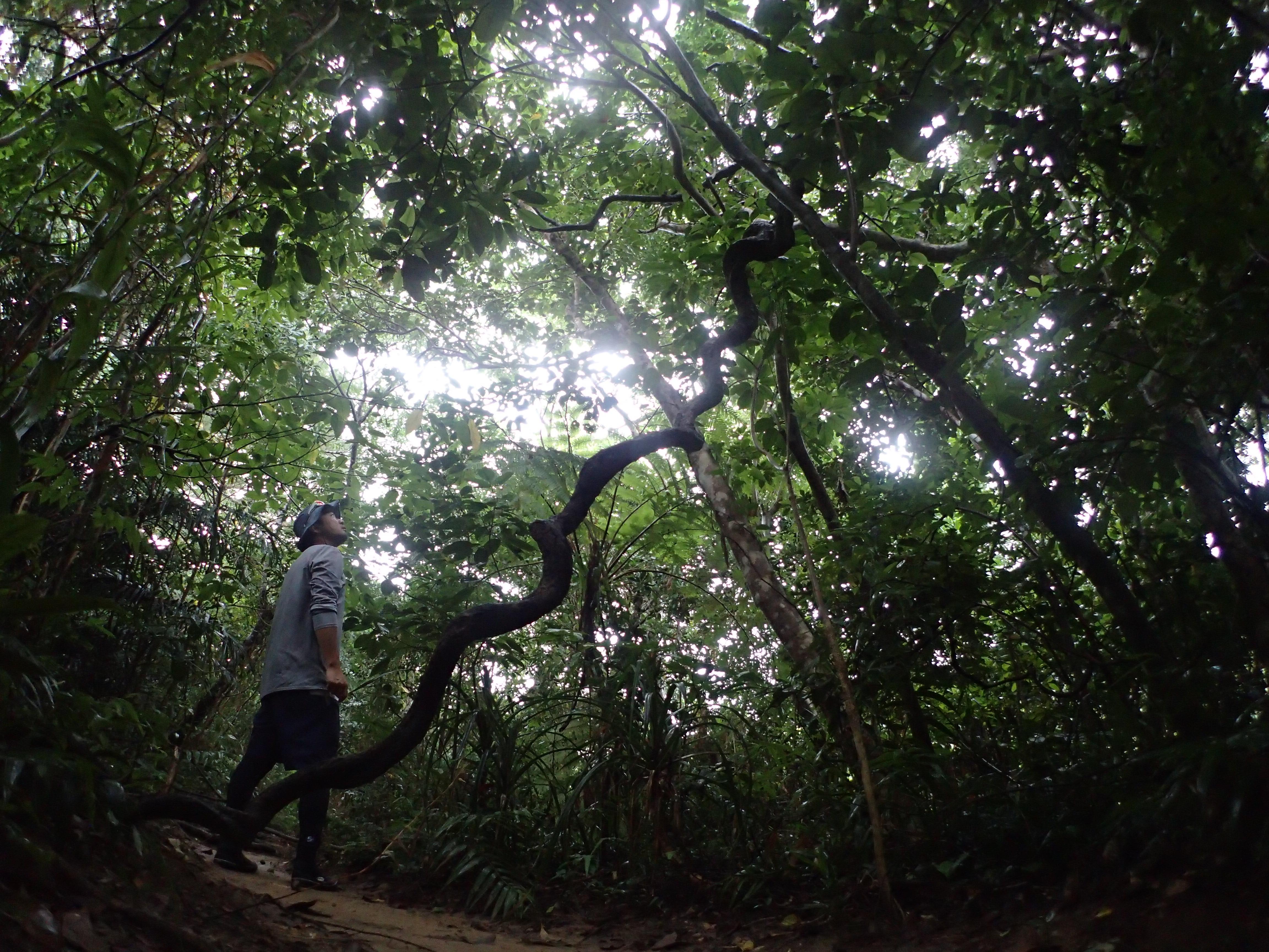 西表島の生い茂るジャングルから漏れる朝日
