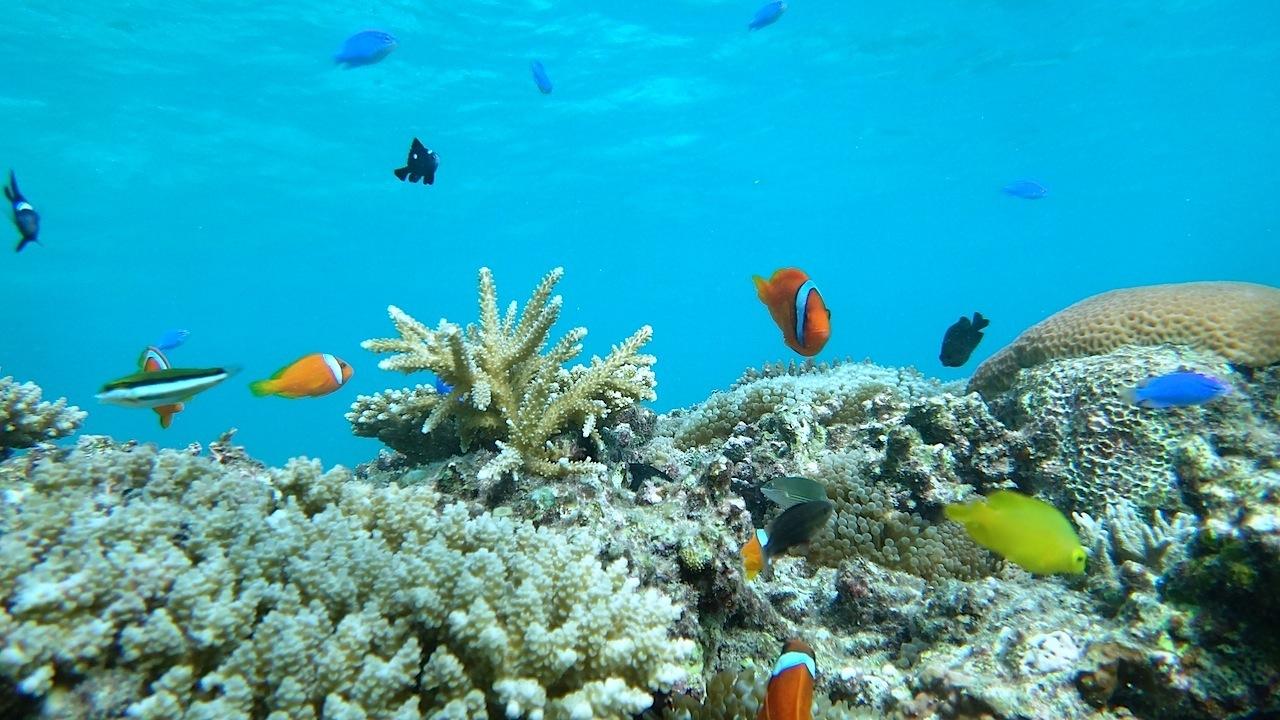 西表島の海を泳ぐ熱帯魚達