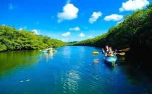 西表島 カヌー ツアー