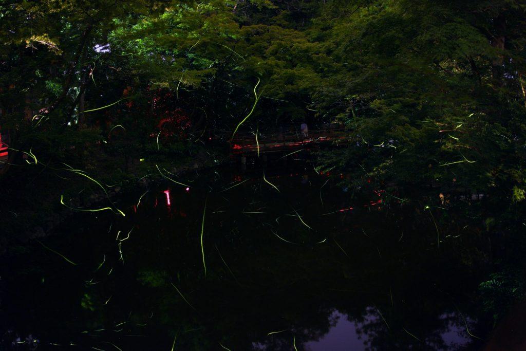 春限定のヤエヤマヒメボタルツアー