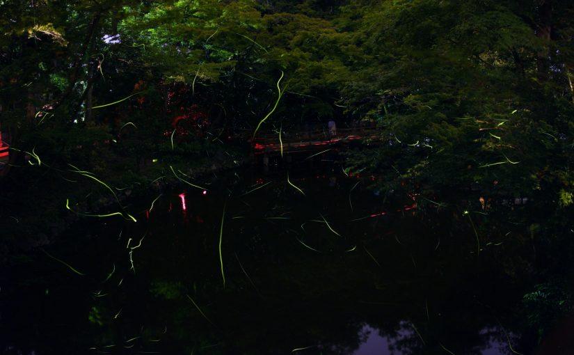 西表島の夜飛び交うホタル