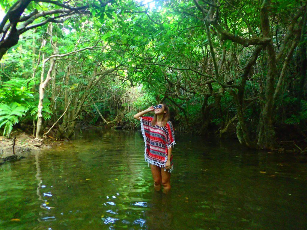 西表島の観光旅行イメージ