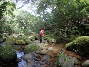 西表島のユツン川をトレッキング