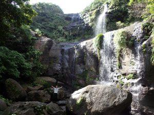 西表島ユツンの滝ジャングルをトレッキング
