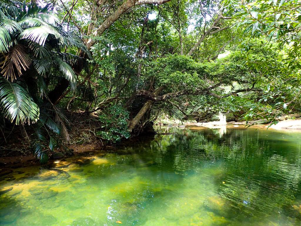 西表島でお子様でも楽しめるモダマ池