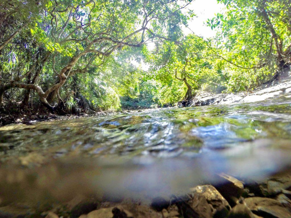 西表マングローブ林