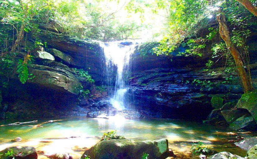 西表島マングローブの滝