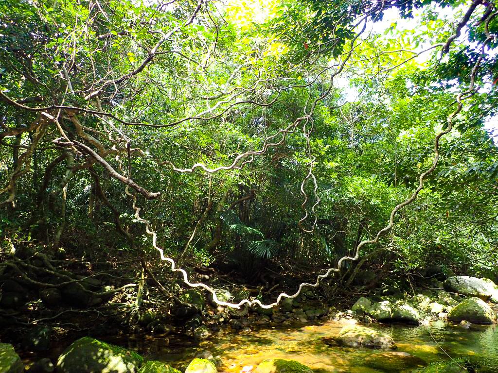 お子様に優しい大自然のあるモダマ池