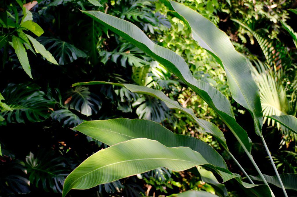 西表ジャングルナイト