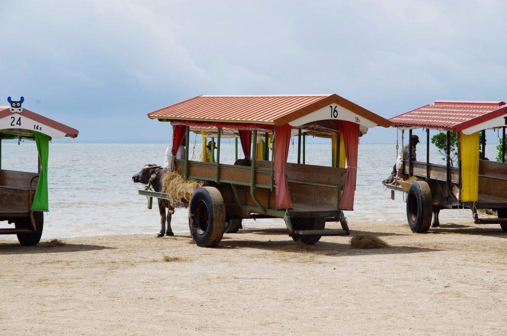 人気の由布島観光