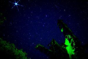 西表島の星空ツアー