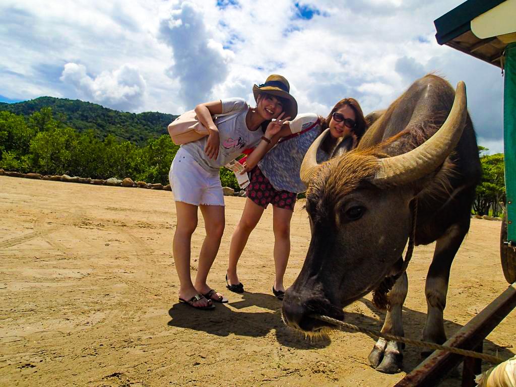西表島から由布島へ渡る水牛車