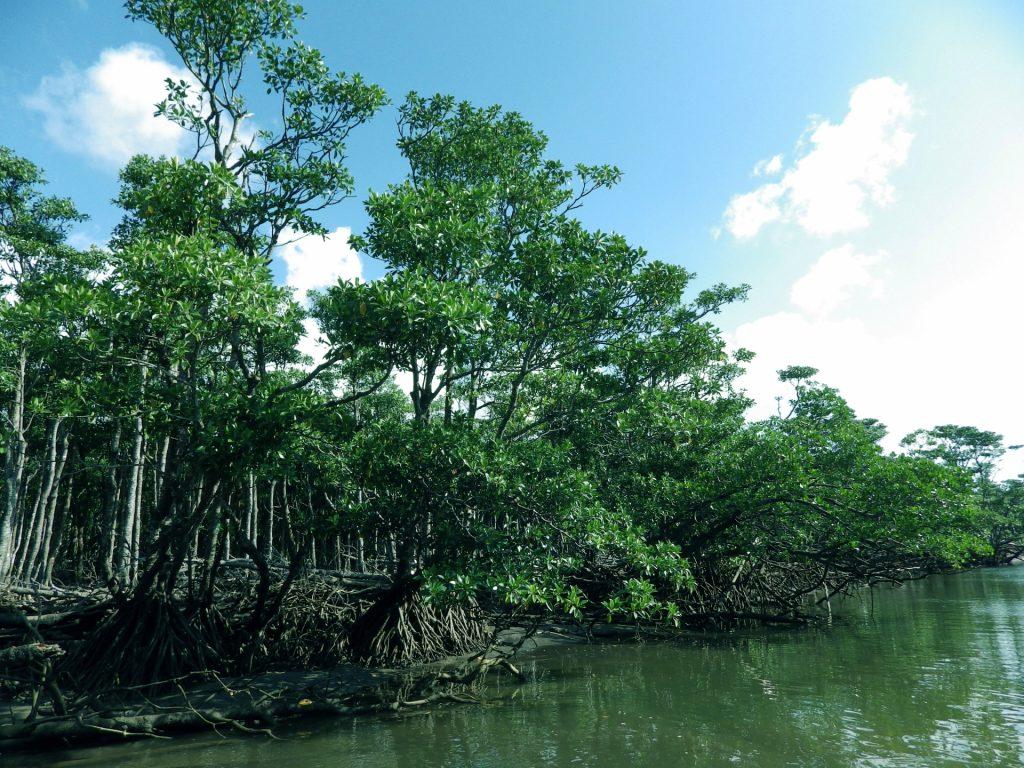 壮大な浦内川のマングローブ