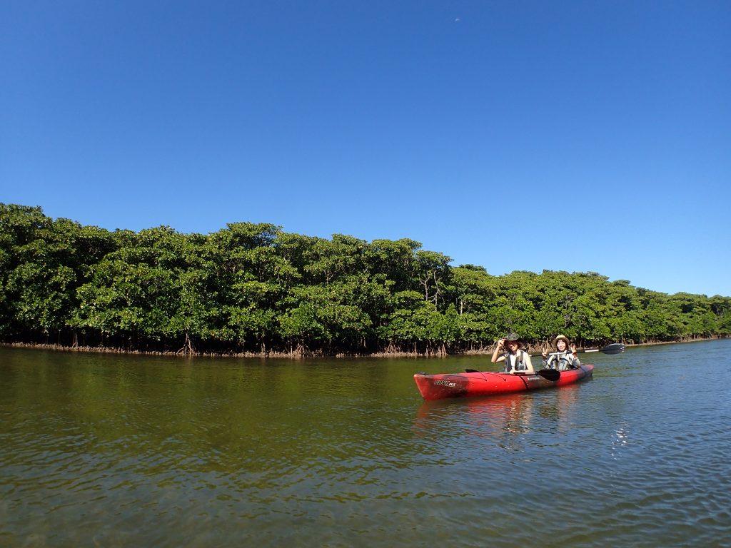 日本最大級のマングローブカヌー