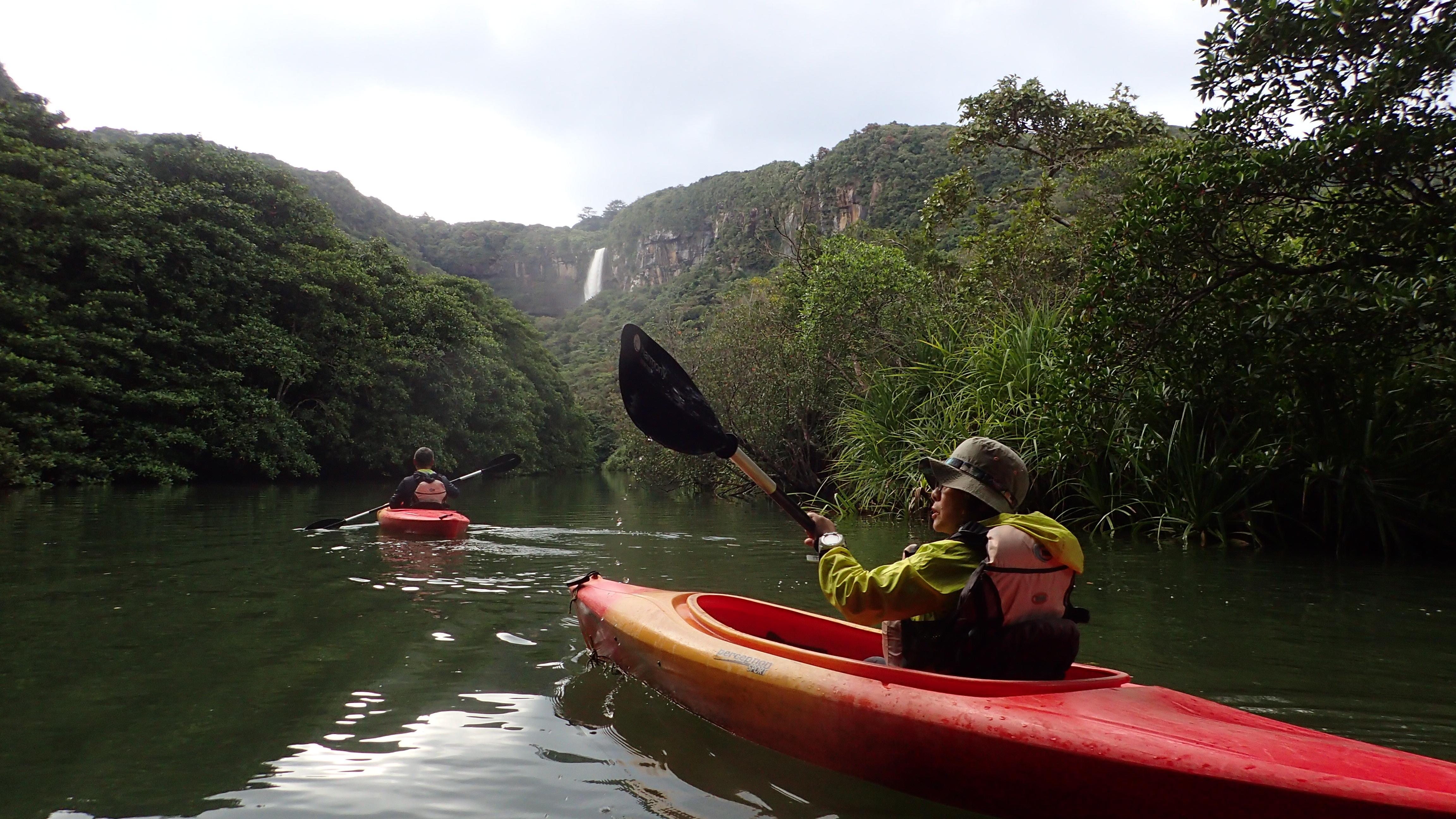 西表島で楽しめるマングローブカヌー