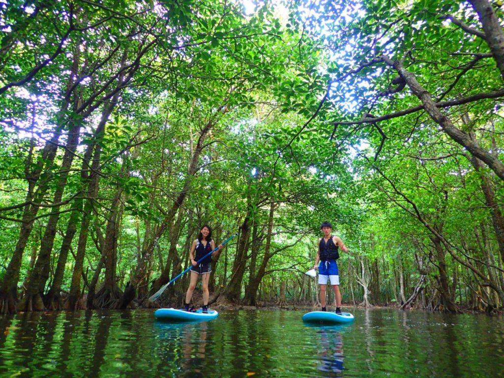 西表島のマングローブでSUPを楽しむ