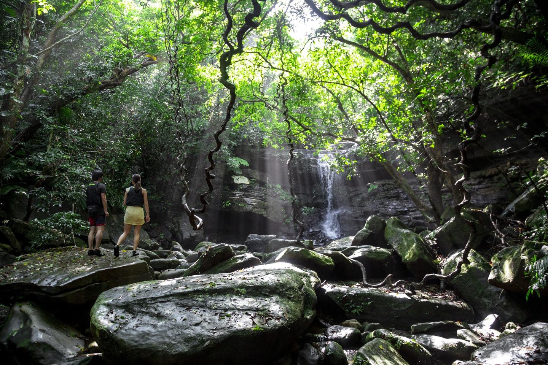【地域共通クーポン対象】世界自然遺産西表島で行うスタンダードマングローブカヌー (No.6)